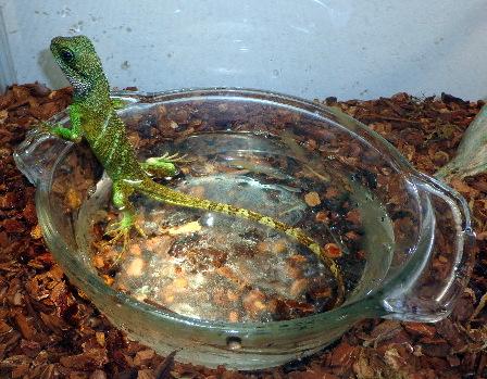 wilma water dish 8-17-13